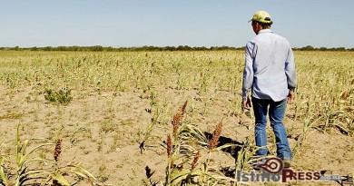 Disminuye expectativa de siembra al 30 por ciento en Ixtepec