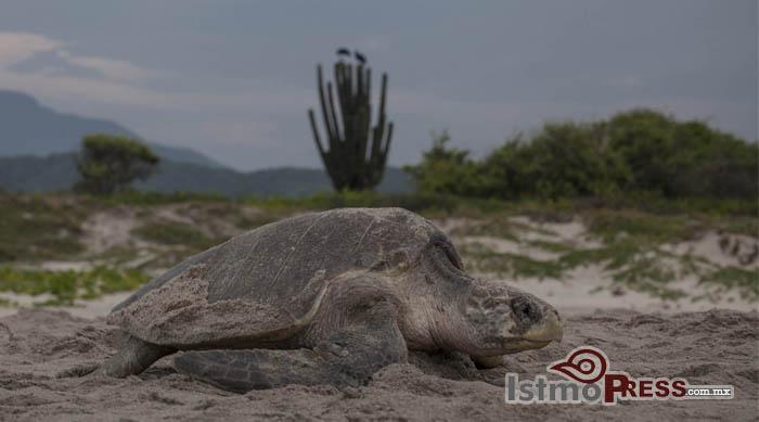 tortugas concientizar
