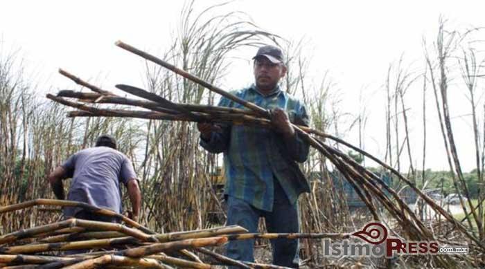 Incumple SETRAO con jornaleros zapotecas