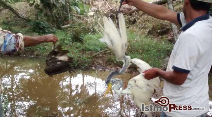 Derrame de gasolina aniquila fauna en arroyo de Guichicovi