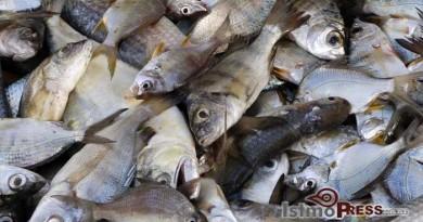 Recomendaciones en la compra de pescados y mariscos