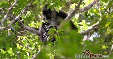 Nativitas, bastión mixe de biodiversidad 3