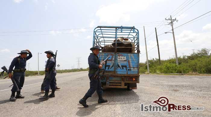 Patrullan Guardias Rurales el istmo contra el abigeato