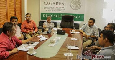 Urgente alinear políticas públicas para mejorar la producción del café en zona alta del Istmo de Tehuantepec: Donovan Rito García