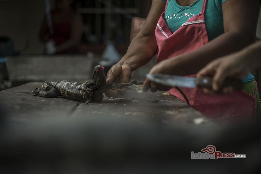 iguanas4