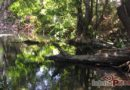 Laguna encantada: estanque que renace./ Víctor Fuentes