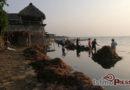 Afecta a pescadores y restauranteros presencia de sargazo en Playa Vicente