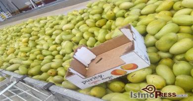 06 Oct Mango en riesgo