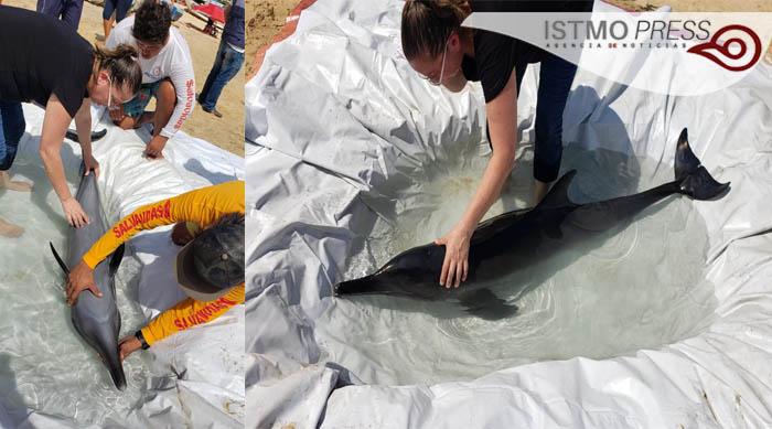 04 Feb Rescate de delfín1