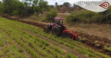 14 Feb Juchitán El maíz zapalote es nuestro