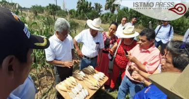 """06 Mar Campesinos zapotecas exigen retiro de """"semillas hibridas"""""""