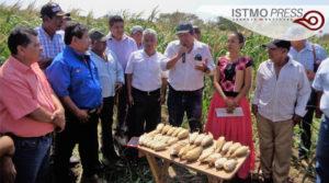 """06 Mar Campesinos zapotecas exigen retiro de """"semillas hibridas""""2"""