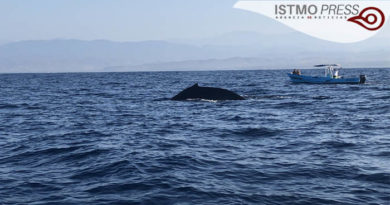 21 Mar Ballenas en costa de Oax