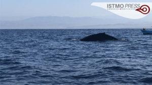 21 Mar Ballenas en costa de Oax1