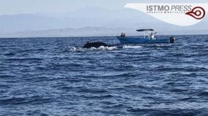21 Mar Ballenas en costa de Oax2