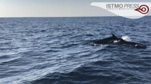 21 Mar Ballenas en costa de Oax3