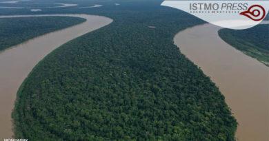 Día Internacional de los Bosques: comunidades, aliadas en su conservación