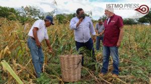 04 Jun Juchitán apoyo de maíz2