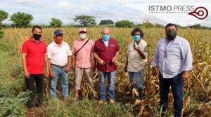 04 Jun Juchitán apoyo de maíz3