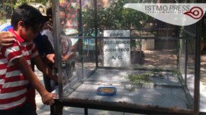 05 Jun Liberación de iguana1