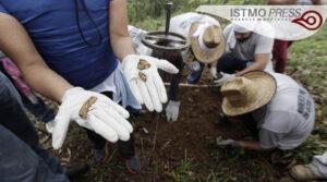 Foto 4. Hallazgos de restos óseos en fosa. Crédito_ Germán Canseco_Proceso
