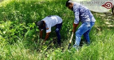 SB reforestación