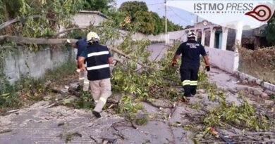 caída de árboles por el norte Juchitán