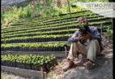 Cafetaleros zapotecas reviven producción y ahora lo exportan a EU de forma independiente