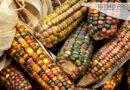 Juez ampara a Monsanto contra decreto para eliminar el glifosato; organizaciones le piden rectificar